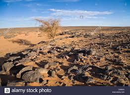 stone desert stony desert libya africa stock photos stony desert libya africa