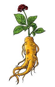 ginseng the truth behind the miracle medicinal herb naturalcave