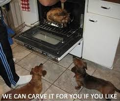 28 best wienie thanksgiving images on dachshunds