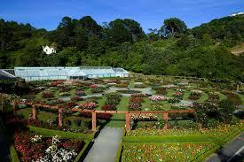New Zealand Botanical Gardens Wellington Botanic Gardens New Zealand Psychedelic Traveler