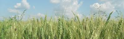 chambre agriculture tarn et garonne s enregistrer chambre d agriculture du tarn et garonne