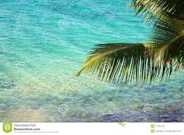 palm tree branch over clear tropical water royalty free stock