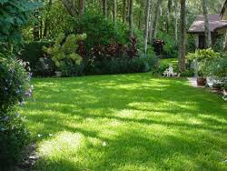 a backyard designing your naturescape