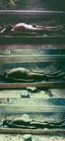 696 best criminology u0026 forensics images on pinterest forensic