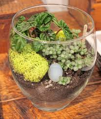 the terrarium trend indoor gardening with a creative flair