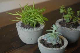 diy mini concrete succulent planters east pearl street