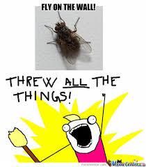 Fly Meme - fly meme 28 images bbyk5 jpg 490 215 391 memes quotes and stuff