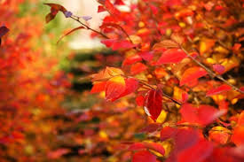 Why Fall Is The Best Season Why Fall Is The Best Season