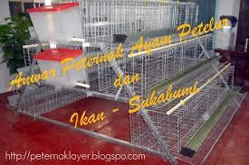 Termometer Kandang Ayam jual kandang ayam petelur ternak ayam petelur