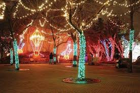 christmas lights at the zoo indianapolis a trip to the zoo in december the indiana insider blog