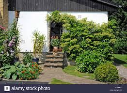 front garden of a country house climbing hydrangea summer