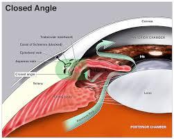 Anatomy Of The Eye Anatomy Of The Eye Doctor Stock
