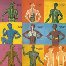 Online Human Body Human Body Systems Ms A Science Online