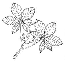 drawing leaves on trees simple drawing tree without leaves youtube