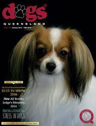australian shepherd queensland dogs queensland the queensland dog world issue 10 october