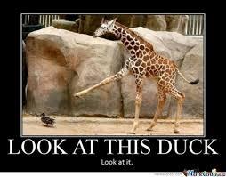 Drunk Giraffe Meme - giraffe memes best collection of funny giraffe pictures