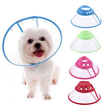 Buster Comfort Collar Best 25 Dog Cone Collar Ideas On Pinterest Pet Costumes For
