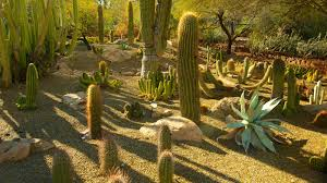 Scottsdale Az Botanical Gardens by Nature Pictures View Images Of Desert Botanical Garden