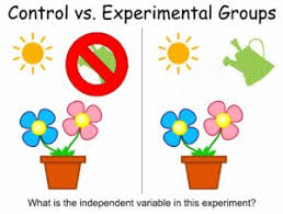 teaching the scientific method and experimental design notes
