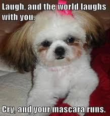 Funny Animals Memes - 10 random totally funny animal memes humorplease com