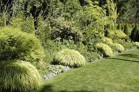 late winter clean up for ornamental grasses the daily world