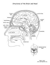 Brain Structures Labeled Coloring Page Brain Coloring Page