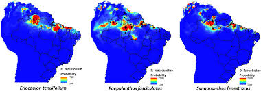 Amazon Rainforest Map Eriocaulaceae In The Brazilian Amazon And The Use Of Species
