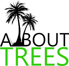 all about trees best tree service in south florida