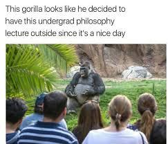 Gorilla Meme - wise gorilla meme by peebee memedroid