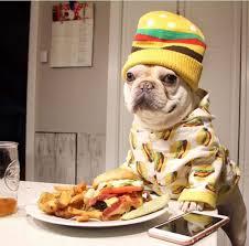 1311 best french bulldog images on pinterest french bulldog