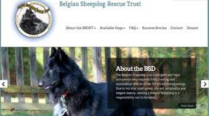 belgian sheepdog rescue colorado colorado springs web designer colorado springs web design