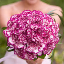 purple carnations beautiful purple carnation bridal bouquet global