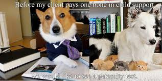 Lawyer Dog Meme - lawyer dog child support funny