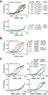 hemi methylated dna regulates dna methylation inheritance through