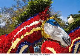 Madeira Flowers - dh flower festival funchal madeira stock photos u0026 dh flower