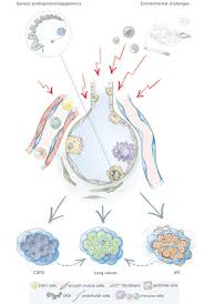 Anatomy And Physiology Of Copd Hallmarks Of The Ageing Lung European Respiratory Society