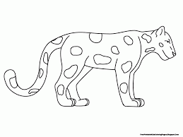 coloring pages animal classification rainforest animals drawings