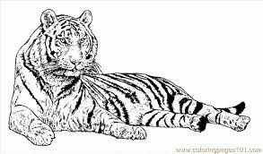 colour number lion animal color number fish source qd0 jpg