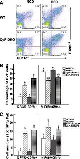 high fat diet u2013induced adipocyte cell death occurs through a