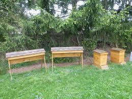 taking stock of the garden u0027s winter losses u2014 veggie gardening tips
