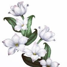 8 best jasmine flower tattoo meaning images on pinterest jasmine