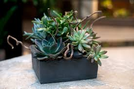 succelents succulents in slate box in boston ma louis barry florist