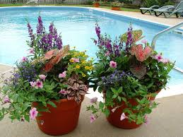 Container Gardening Ideas Fall Easy Container Gardening Best Container Garden Ideas