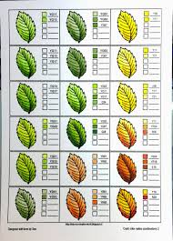 coloring nature with copics leaves crafting for holidays