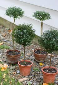 342 best topiary images on pinterest topiaries gardens and