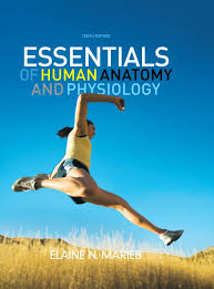 Human Anatomy And Physiology Marieb 7th Edition Human Anatomy And Physiology Marieb Th Edit Science Essentials Of