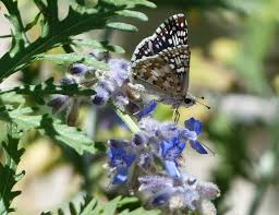free photo gardening gardens butterfly plants flowers insects