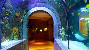 dallas world aquarium pictures view photos u0026 images of dallas