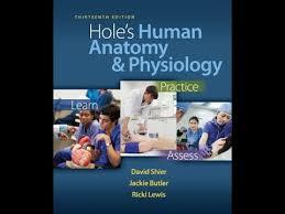 Human Anatomy And Physiology Pdf File Pdf U0027 Hole U0027s Human Anatomy U0026 Physiology 13th Edition Youtube
