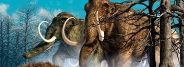 woolly mammoths brought dead